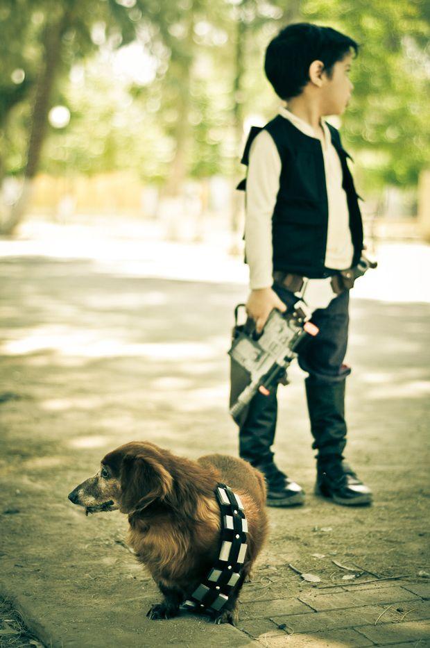 Chewbacca & Friends by Cuije Photo | Star Wars Dog | Pretty Fluffy