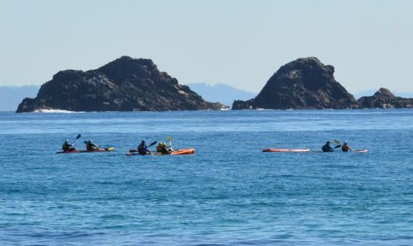 What better way to experience Byron Bay than kayaking among dolphins, whales and turtles in the clear blue waters with Go Sea Kayaks.