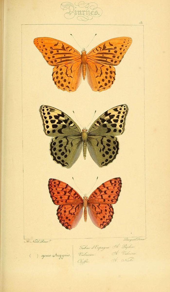 File:Histoire naturelle des lépidoptères d'Europe (Plate 18) (6053825858).jpg