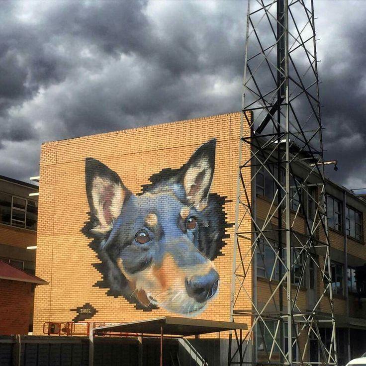 Blue Heeler artwork in AUSTRALIA
