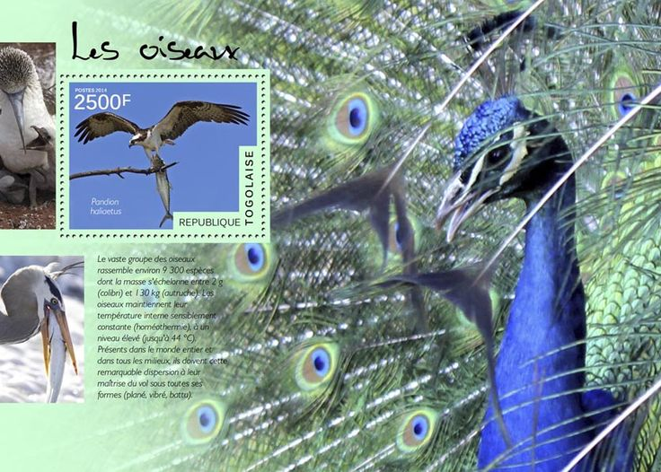 TG 14502 bBirds (Pandion haliaetus)