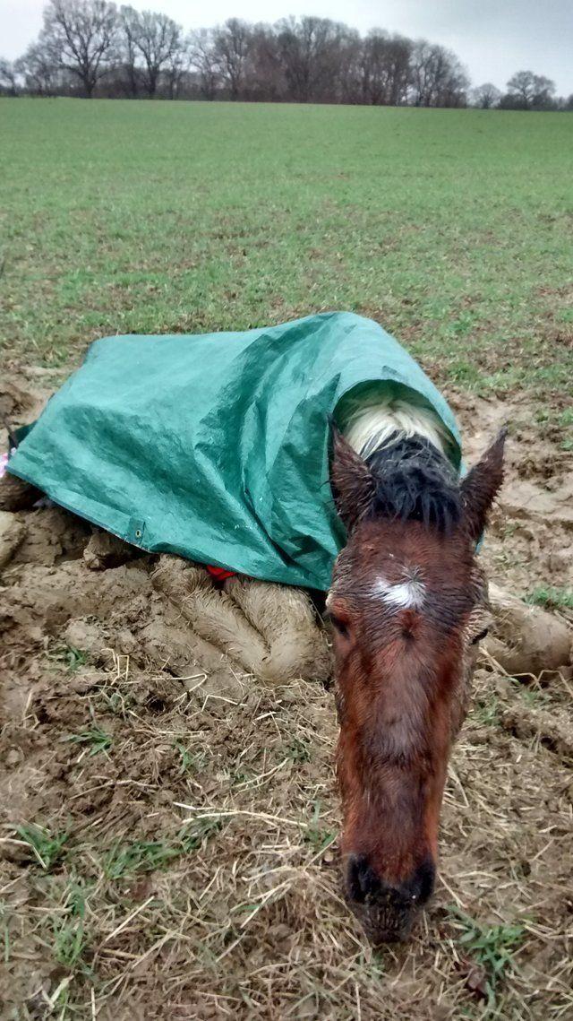 Больного жеребёнка вывезли в поле и оставили погибать (7фото)