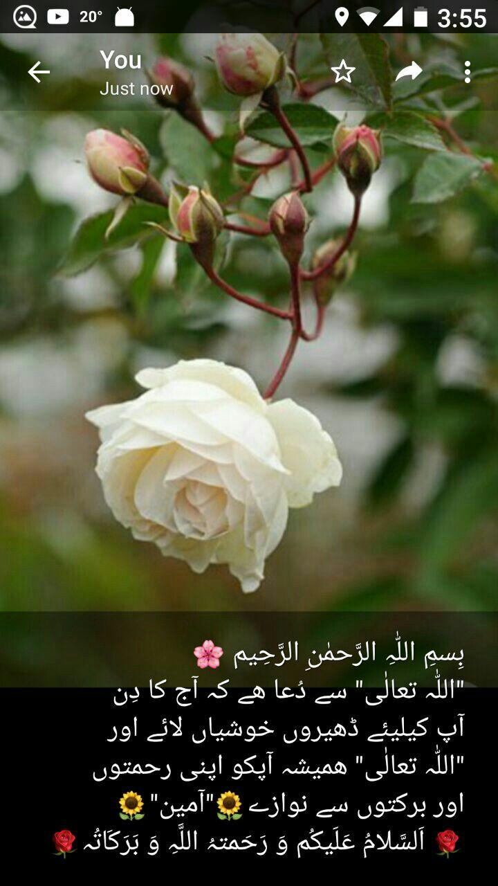 Pin By Mian Zubair Zia On Duain Good Morning Flowers Morning Prayer Quotes Good Morning Greetings