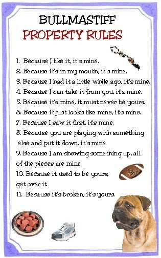 Bullmastiff Dog Property Rules Magnet Very Funny By