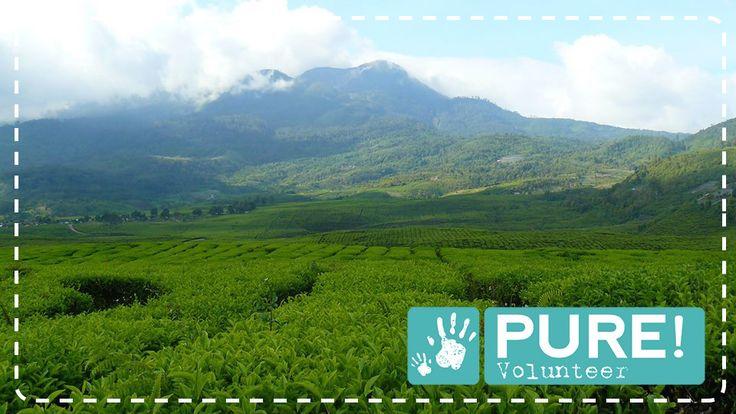 Prachtig vrijwilligersproject op Sumatra! Klik voor meer informatie op de afbeelding