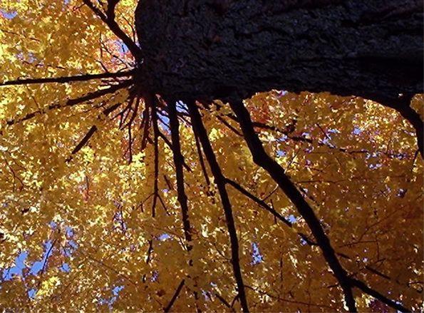 Golden Leaves of Autumn 2