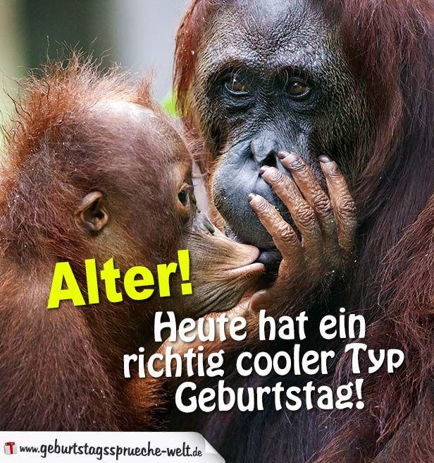 Zwei Affen flusstern sich was zu