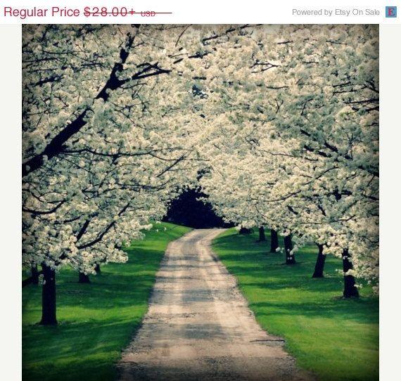 Spring Sale 15% Off Spring Driveway Fine Art Photography White Dogwood Flower Trees Green Woodland Bold Modern Cottage Spring Summer Home De