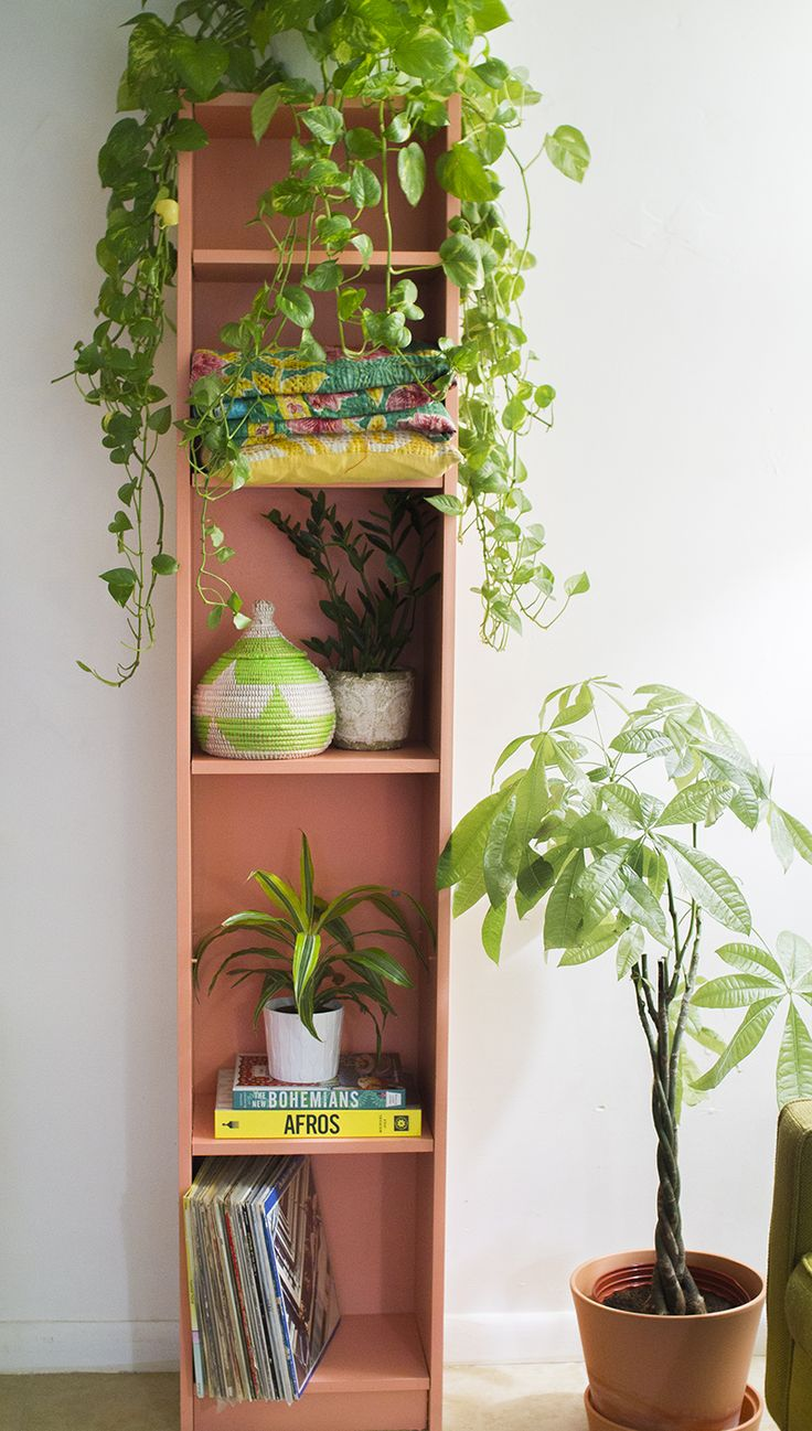 A great example of using houseplants to decorate (pictured here: a trailing pothos, ZZ plant, dracaena, and money tree) inside the home via the blog LaTonya Yvette.
