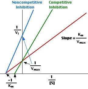 LB = I/v and I/s (makes it linear). Competitive changes the slope and Km of a reaction, but has same Y intercept.  Noncompetitive inhibition, which cannot be overcome by adding excess substrate, has the same X intercept.  NON makes a V.  Competitive makes an X.