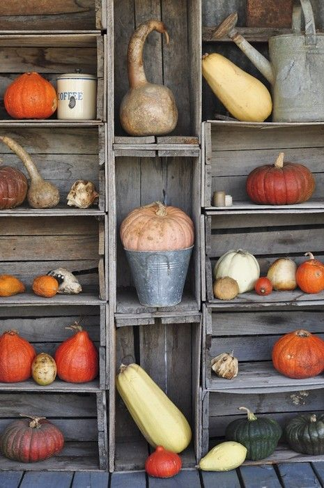 Pumpkins & gourds displayed on rustic wood crates / shelves.  #porch #decor #fall #autumn #country #farmhouse #chic #rustic #prim