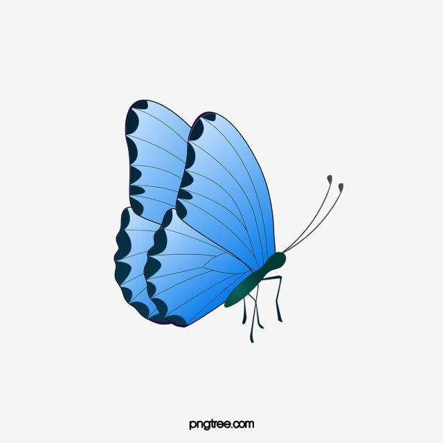 Blue Butterfly Butterfly Clipart Butterfly Png Transparent Clipart Image And Psd File For Free Download Borboleta Azul Baloes Azuis Borboletas Coloridas