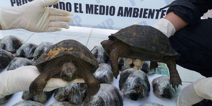 Policía Nacional rescata a más de 3 mil animales silvestres del cautiverio [FOTOS y VIDEO] - Diario Perú21