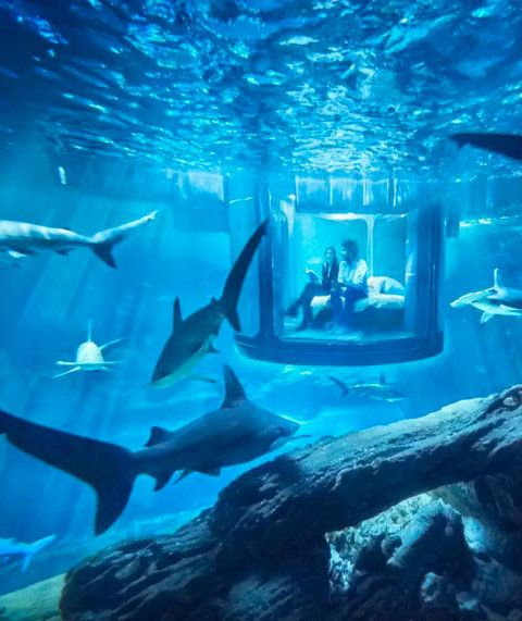 Airbnb Shark Bedroom | The vacation rental site is offering a once-in-a-lifetime opportunity.