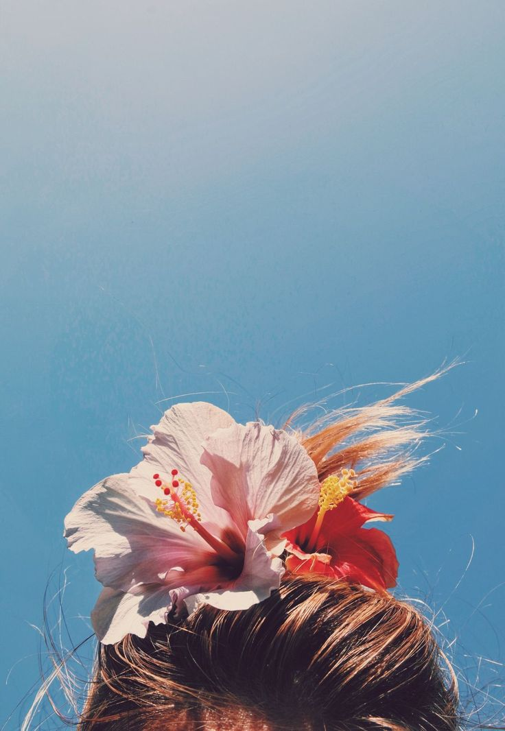 hibiscus bun