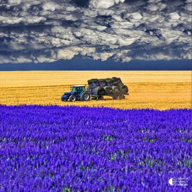 In the Fields, Provence-Alpes-Cote d'Azur  Follow the pic for more pics