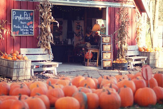 Pumpkin patch and Christmas tree farm with a seasonal primitive store in a small barn.