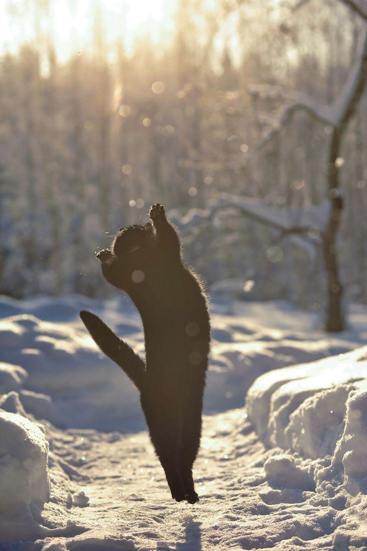 52 magnifiques photos de chats qui sautent   53 superbes photos de chats qui sautent jumping cats 19