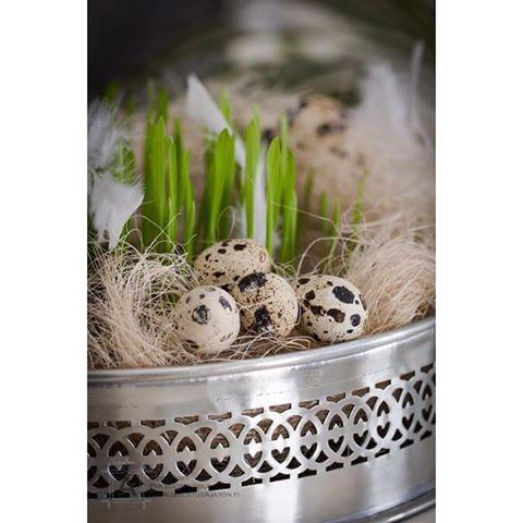 #hyvääpääsiäistä #pääsiäinen #kevät #koristeet #ohra #höyhen #sisustus #ajaton #happyeaster #feather #påsk #gladpåsk