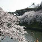 March 20 or 21 is Vernal Equinox Day in Japan. This is public holiday and the Japanese have a day off to spend with family