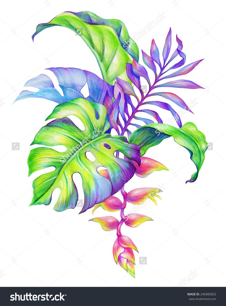 watercolor tropical plants - Recherche Google