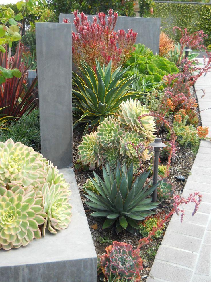 Succulentes et cactus pour endroits ensoleillés, chauds et secs.