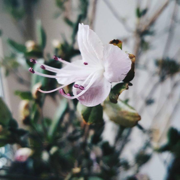 Доброго воскресного ☕ Весна☉   #доброеутро #весна #март #фотонателефон #цветы #природа #Пушкино #Подмосковье #vsco #vscocam #Moscowregion #samsung #lifestyle #Natka_lifestyle #nature #instaflowers #flowers #foto #spring #mar #march