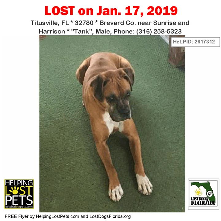 Have you seen this lost dog? LOSTDOG Tank Cocoa