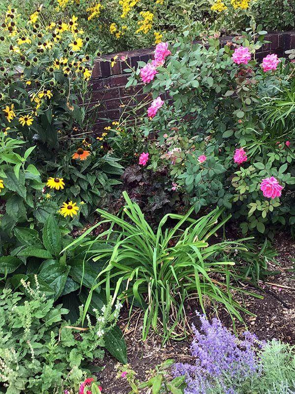 3cf61f09b0f4d56ad45a5896f475d8ba - University Of Illinois Extension Master Gardener Program