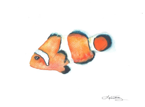 1000  images about clown fish and clown fish painting on pinterest