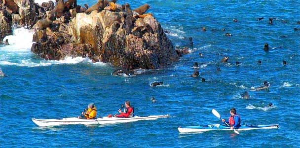 Puerto Deseado es una ciudad y puerto pesquero de la Patagonia, en la provincia de Santa Cruz, sobre la orilla norte de la ría Deseado. Su exuberante fauna marina en estado salvaje es un gran atractivo turístico. Charles Darwin quedó fascinado con este lugar cuando desembarcó en 1833.