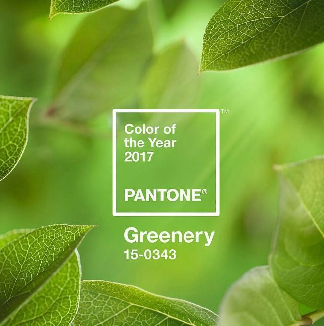 """Pantone ujawnia barwę na 2017 rok. Poznaj kolor """"greenery"""""""