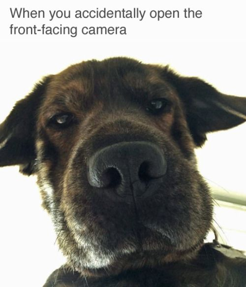 25+ Best Ideas About Dog Humor On Pinterest