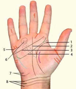 Что скажут о тебе линии на руке