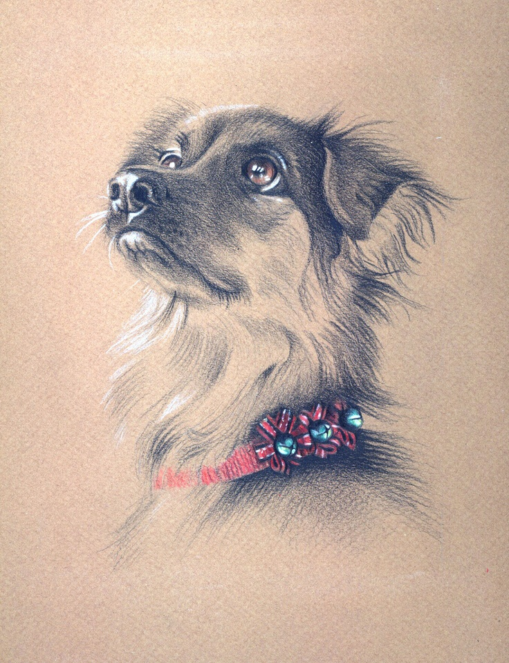 """California Christmas Canine"" dog - animal portrait - pastel"