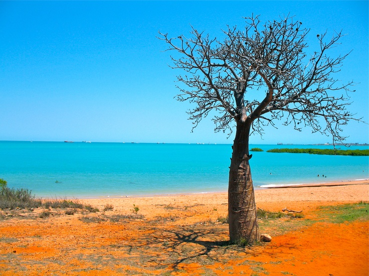 A lone Boab tree puts a great contrast in the scenery at Cable Beach, Broome