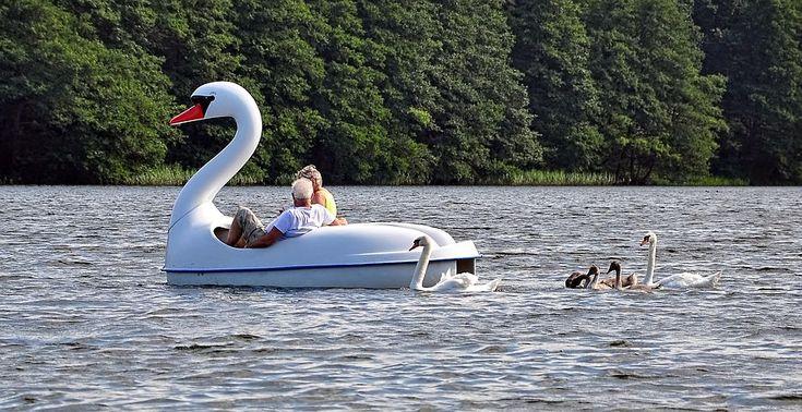 Swan, Leader, Boat, Lake, Shape