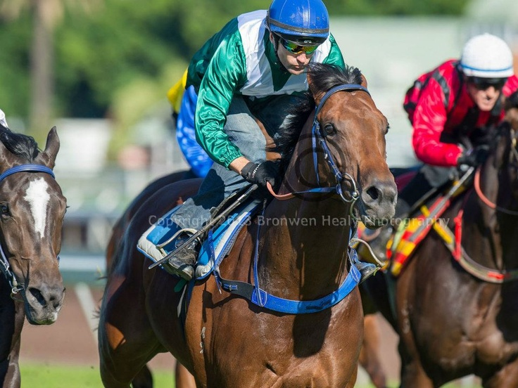 All Too Hard (Casino Prince - Helsinge) wins his barrier trial on the inside grass at Royal Randwick on Friday 19 April 2013. Trained by John, Wayne and Michael Hawkes. It was his final serious hitout before resuming in the G1 All Aged Stakes. Photo by Bronwen Healy.