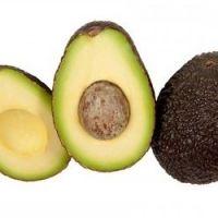 Lamb Hass Avocado (dwarf avocado tree)
