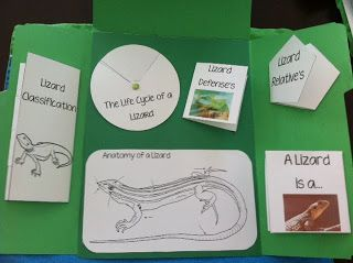 Learn all about #Lizards