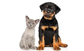 Alerts & Recalls for Pets-News Center Topics | petMD