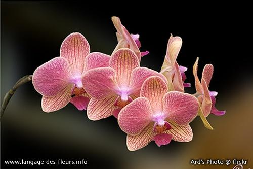 dans le secret des fleurs l orchid e est symbole de luxe volupt myst re et passion cette. Black Bedroom Furniture Sets. Home Design Ideas