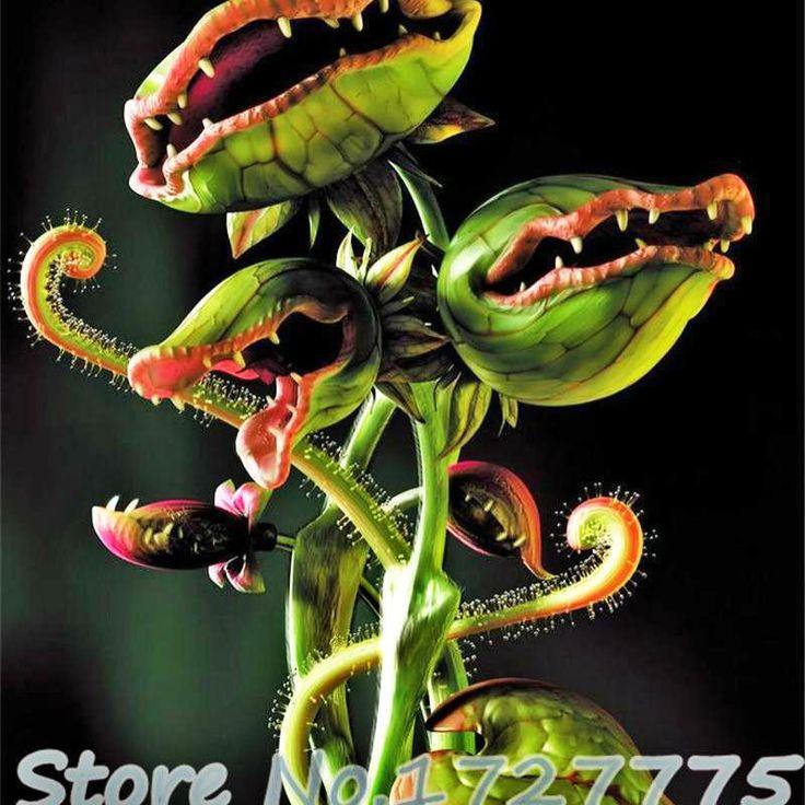 Home garden 20 seeds venus fly trap dionaea muscipula