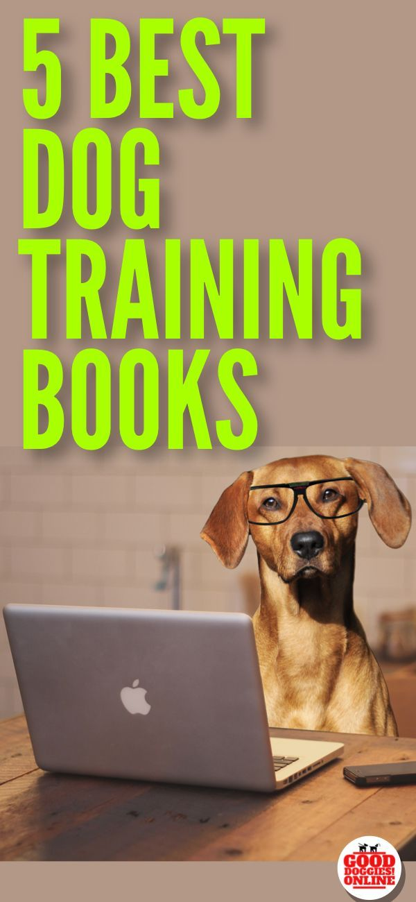 Get The Best Dog Training Books Recommendations Here We Give You