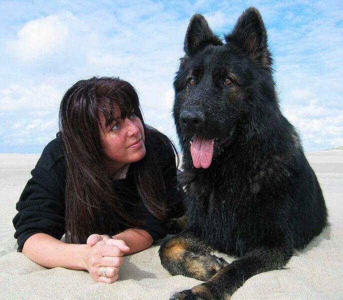 Mijn Oudduitse Herder Widar