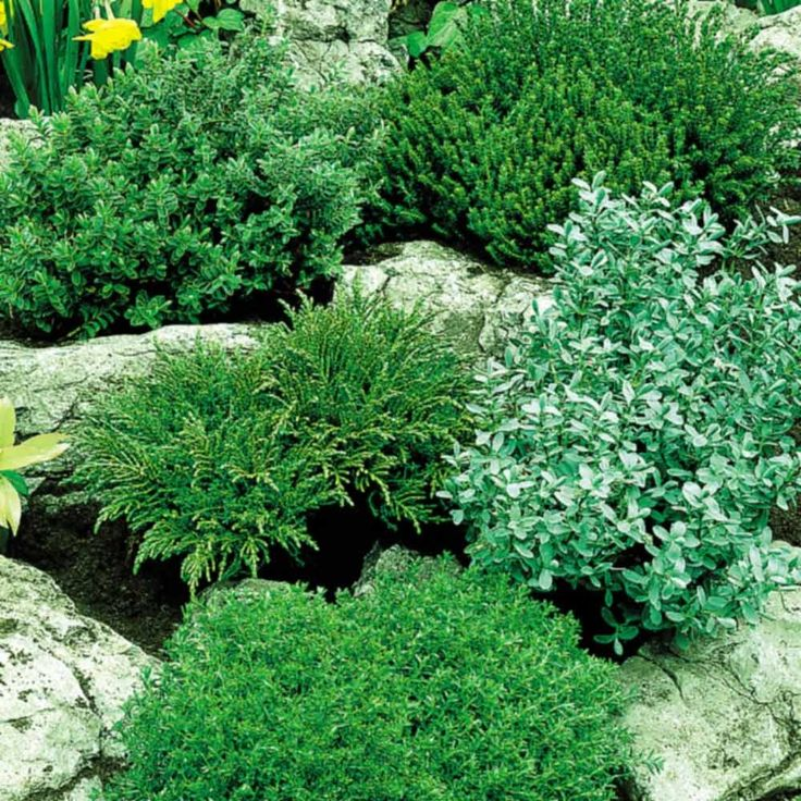 178 best New Border Plants images on Pinterest Border plants