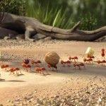 Τι κάνουν τα μυρμήγκια και οι μέλισσες καλύτερα από μας;