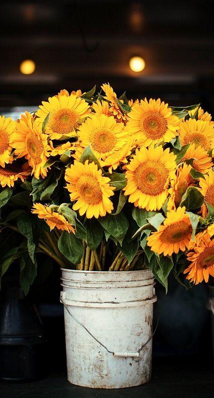 Sunflowers are happy