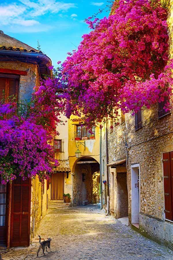 audreylovesparis: Nice, France   La vie en rose