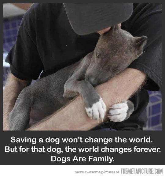 """""""Saving a dog won't change the world. But for that dog, the world changes forever. Dogs are family."""" <3"""